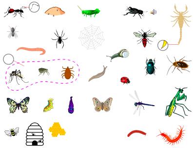 les insectes anglais vocabulaire languageguideorg