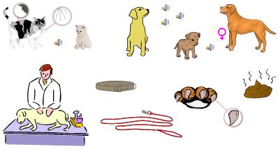 les animaux de compagnie anglais vocabulaire